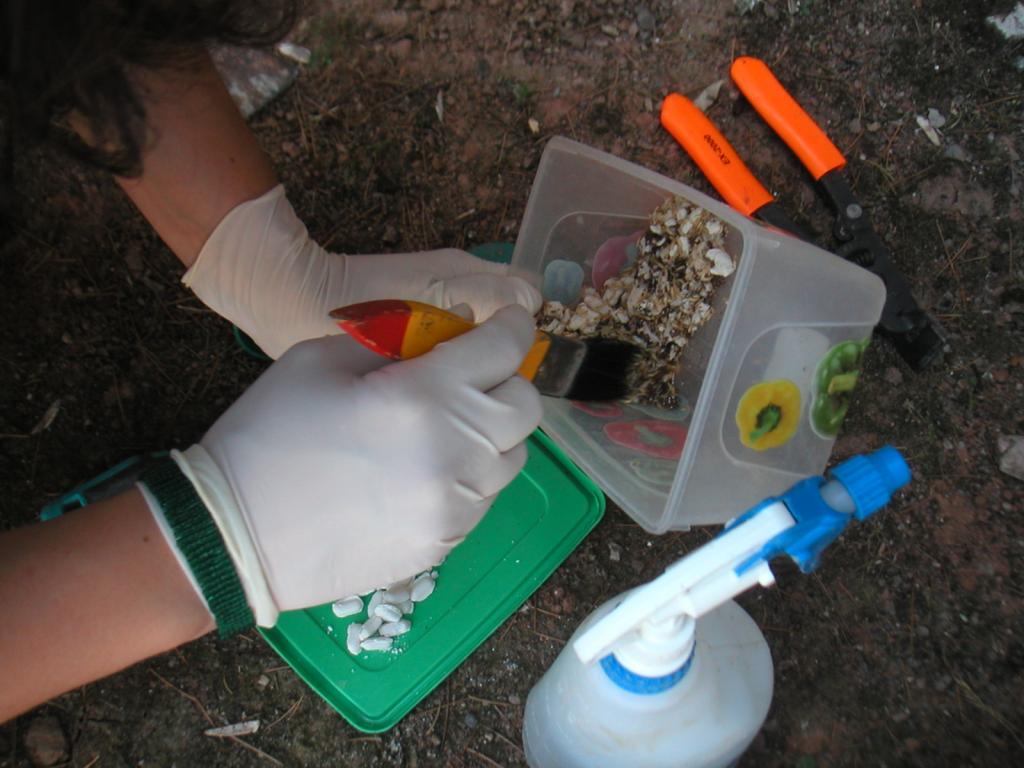 Eliminación de colonias de termitas subterráneas