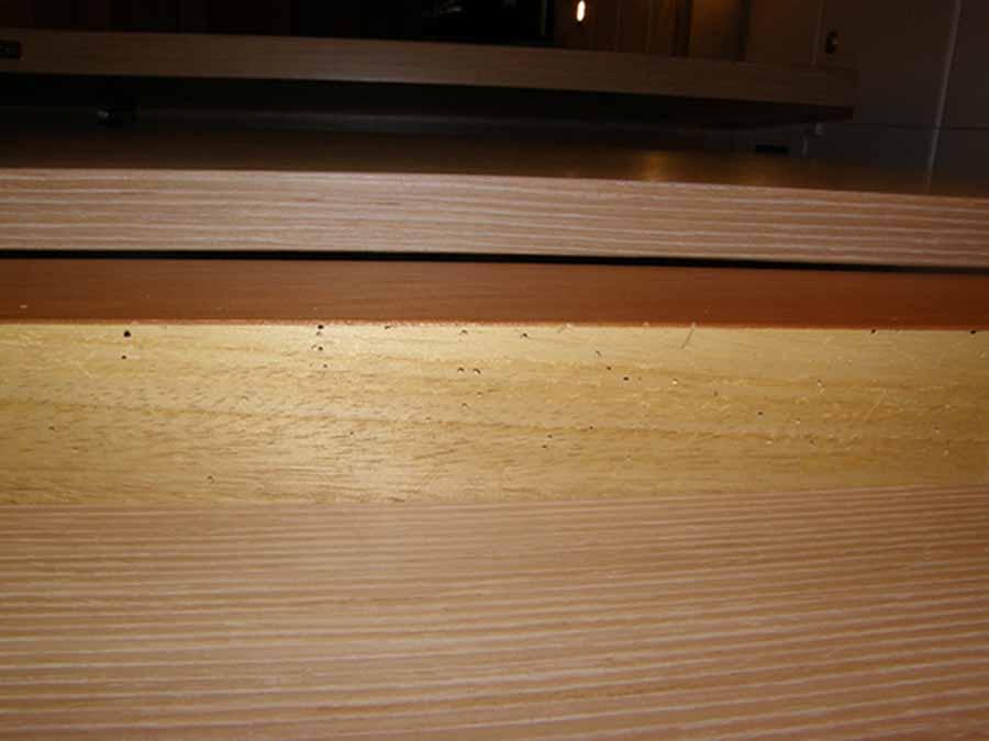 Orificios de salida producidos por el líctido en el camarote