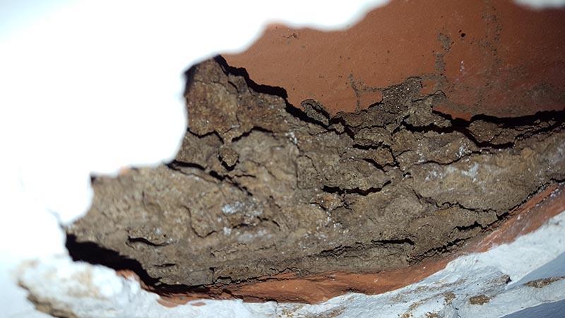 Estructura de la colonia aérea encontrada en el interior de la bovedilla.